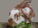 Flyer Kaninchenhilfe Nordfriesland